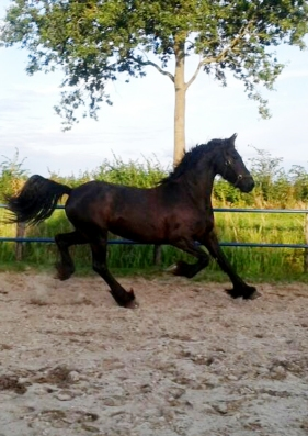 Groepsaccommodatie-Friesland-paard