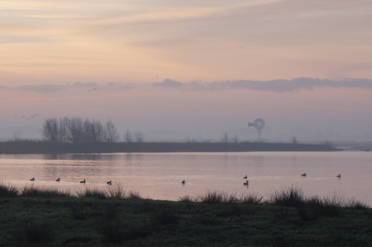 Groepsaccommodatie-Friesland-mooi uitzicht over t land
